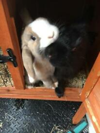 Rabbits + hutch