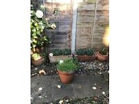 Terracotta Garden Pots x 3 and Window Boxes x 2 - £15 SW19