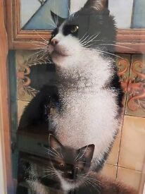 picture of 2 cats