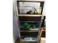 Fish tank rack