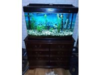 Fish tank on a stand , great filter worth 80 pounds, maintainance equipment and other accessories