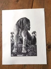reproduction print of dog