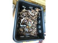 Homemade worming compost - Free!
