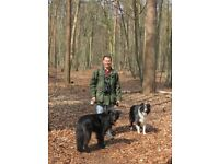 Paul's Pet Services (Dog walking and pet/house sitting)