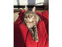 Looking to reciprocate cat sitting services Battersea area