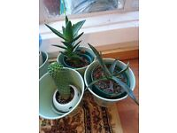 5 Differents Cactus and Succulents plants trees in nice pots