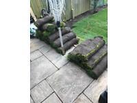 Garden turf