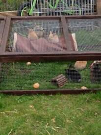 Baby rabbits boy and girls