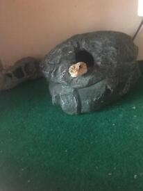 Reptile rescue!