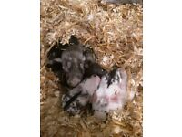Babie Rabbits