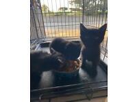 Kittens sold