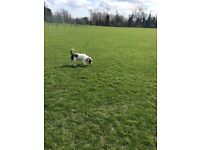 Paws First UK-dog walkers Rochester, dog walker, day care, animal visits