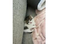 Fluffy kitty's
