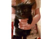 8 Beautiful Kittens For Sale
