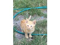 LOVELY KITTENS FOR SALE READY TO GO EAST LONDON