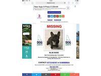 French bulldog stolen