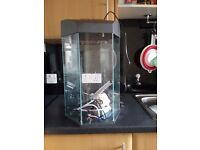Hexigon 30 ltre fish tank plus heater filter and thermostat