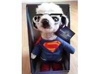Brand New Meerkat Sergei Superman
