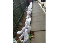 25 Bags of Red/Light pink gravel, stones, Chuckies
