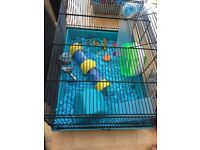 Dwarf male hamster with cage and accesories