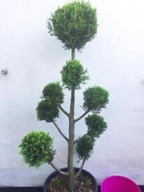 Cloud cut topiary