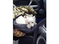 URGENT!!! Nice familly with a litle westie dog loocking for a 1-2 bedroom house in south west London