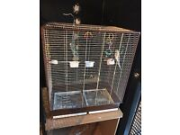 Budgies + cage & accessories for sale.
