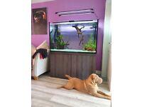 550l aquarium