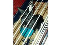 Black indoor rabbit