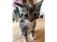 Beautiful friendly kittens for sale