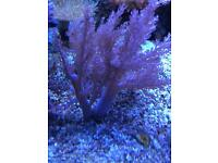 Kenya tree marine corals