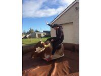 Rodeo Bull (bucking bronco)