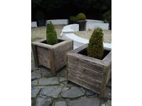TWO LARGE WOODEN PLANT POTS PLANTS NOT INCLUDED ONLY £50 THE PAIR