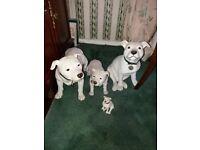Staffordshire dog figurines
