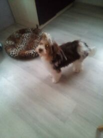 Selling a lovely yorkshire terrier 5 month's old £600