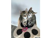2 adorable male kittens