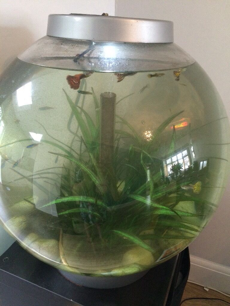 biorb 60 litre fish tank with tropical fish heater pebbles in romford london gumtree. Black Bedroom Furniture Sets. Home Design Ideas
