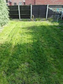 garden maintenance, cutting, edges, landscape, cleaning,clearing