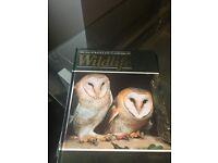 Wildlife Encylopaedias - 52 books