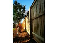 Property & Garden Maintenance
