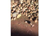 Cream garden stones