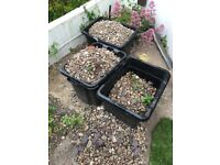 Garden stones free to collect