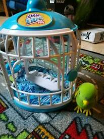 Live little bird and cage