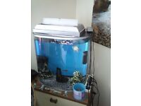 Aquarium !!! Plus everything what you need for it + 4 fish !!!