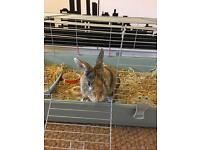 Rabbit with cage--Freddy