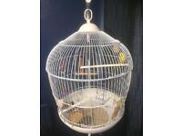 Baby budgie + cage and stand