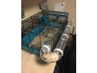 Cheap 3month Hamster - all included, cage, food, bedding, toys and hamster £30