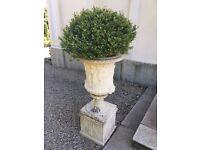 Large Ornamental Plant Pots