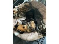 Beautiful kittens 10 week old 3 x tabby girls & 2 x boys **SOLD**