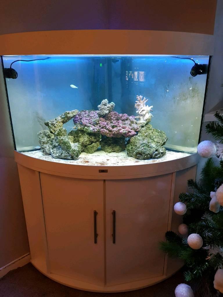 Juwel Trigon Marine Fish Tank Corner White 190